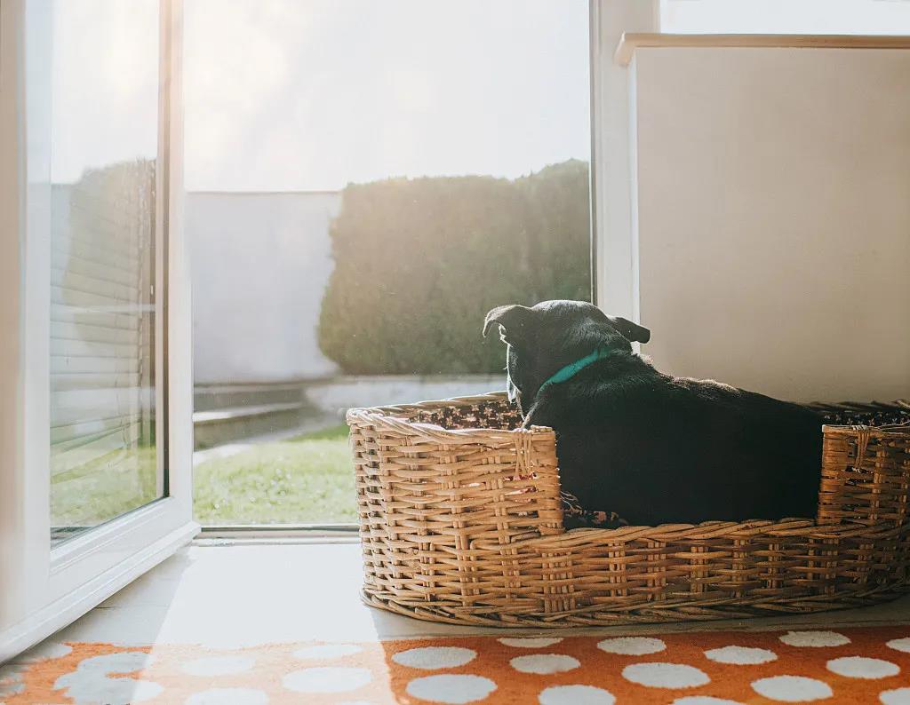 居家养宠物禁忌,这些地方不宜安置宠物