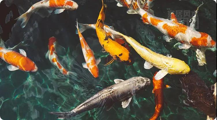 养鱼招财?快来看看你家的鱼养对了吗